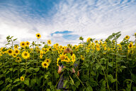 Woman standing in field of sunflowers, holding flowers in front of face, Ural, Sverdlovsk, Russia, Europe - CUF11492