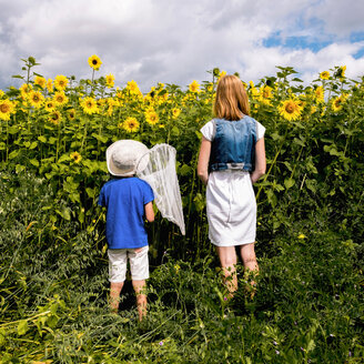 Mother and son standing in field of sunflowers, son holding butterfly net, rear view, Sverdlovsk, Russia, Europe - CUF11495