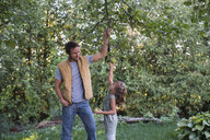 Father helping daughter reach apple on tree - ISF03758