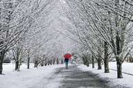 Woman walking along path, carrying umbrella, in snow covered rural setting, rear view - ISF04007