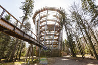 Germany, Bad Wildbad, Black Forest, Canopy Walk Black Forest against the sun - WDF04669