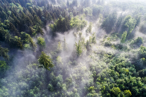 Germany, Baden-Wuerttemberg, Swabian Alb, Aerial view of Schurwald, morning fog - STSF01568