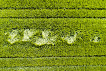 Aerial view of grain field - STSF01577