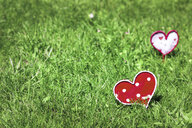 Home-made hearts on meadow - CMF00812