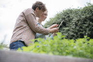 Young man and woman in urban garden, photographing plants using digital tablet, low angle view - ISF04545