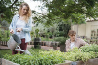 Young man and woman tending to plants in wooden troughs, young woman water plants using watering can - ISF04650