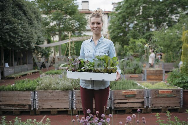 Woman in garden holding tray of plants - ISF04665
