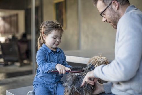 Girl and father grooming pet dog in living room - ISF05128