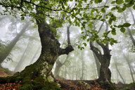 Low angle view of misty forest, Crimea, Ukraine - CUF13464