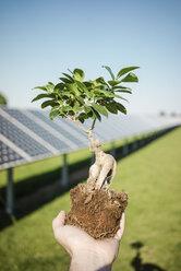Male hand holding privet, solar plant - MOEF01117