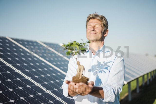 Mature man looking at privet, solar plant - MOEF01126