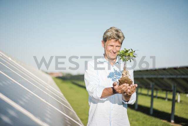 Mature man looking at privet, solar plant - MOEF01162