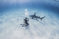 Diver taking photograph of Great Hammerhead Shark - CUF17467