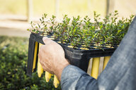 Cropped close up of scientist carrying plant tray in plant growth research centre - CUF17698