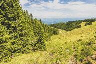 Austria, Styria, forest - AIF00500