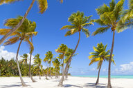 Palm trees and blue sky at beach, Dominican Republic, The Caribbean - CUF19732