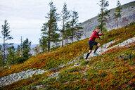 Trail runner ascending steep hill with trekking poles, Kesankitunturi, Lapland, Finland - CUF20120