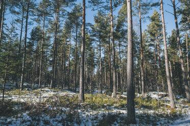 Sweden, Sodermanland, remote forest landscape in winter - GUSF00914