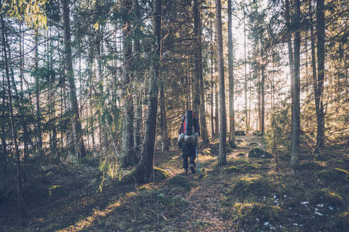 Sweden, Sodermanland, backpacker hiking in remote forest in backlight - GUSF00920