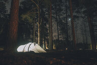Sweden, Sodermanland, tent in forest under starry sky at night - GUSF00926