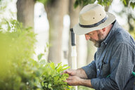 Scientist examining plants at plant growth research facility - CUF20253