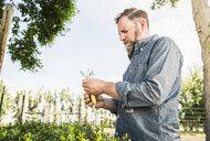 Scientist examining seedling at plant growth research centre - CUF20265