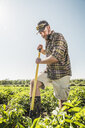 Bearded man digging vegetable patch - CUF20289