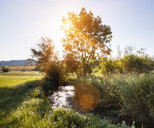Sunlit landscape with tree's and stream - CUF22137