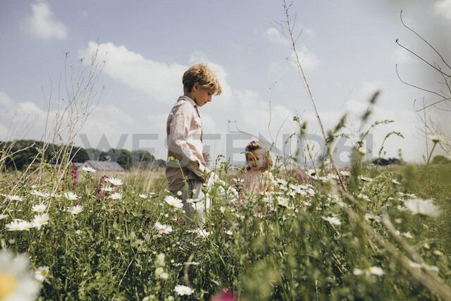 Siblings picking flowers on a meadow - KMKF00263