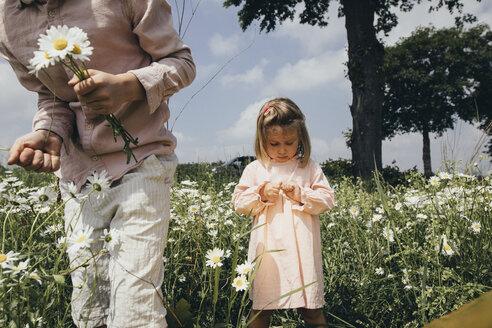 Siblings picking flowers on a meadow - KMKF00266