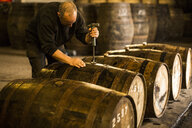 Male worker opening wooden whisky cask in whisky distillery - CUF22341