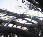 Boy lying in tree sleeping - ISF08564