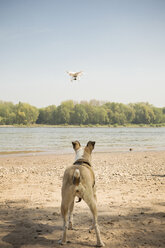 Dog watching drone flying at a river - ONF01138