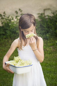 Girl with bowl of picked elderflowers smelling blossom - LVF07018