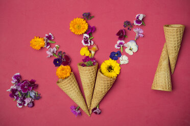 Ice cream cones and edible flowers on red background - SKCF00484