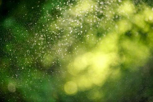 Water drops of lawn sprinkler - MMAF00368