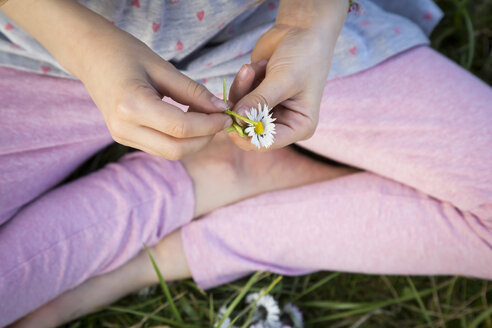 Hands of l ittle girl sitting on a meadow holding daisy, close-up - LVF07030