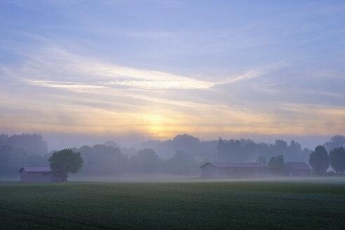 Germany, Bavaria, Swabia, Tuerkheim, morning fog at sunrise, Augsburg Western Woods Nature Park - SIEF07785