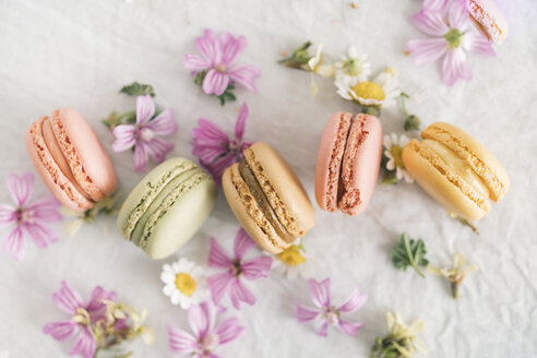 Macarons with blossoms - JPF00323