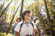 Three young adult hikers looking up in forest, Arcadia, California, USA - ISF08807