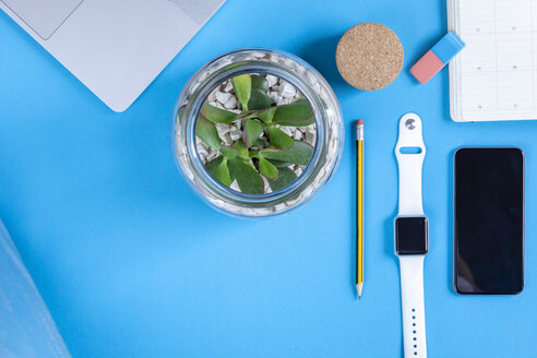 Business desk with potted plant in front of blue background seen from above - MMAF00371