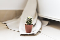 Small potted cactus - AFVF00625