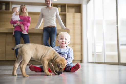 Family watching male toddler with puppy on dining room floor - CUF26441