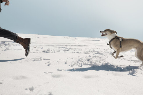 Man playing with dog in winter, running in the snow - REAF00269