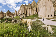 Turkey, Aksaray Province, Guzelyurt, Selime, Sheep grazing on pasture - FPF00178