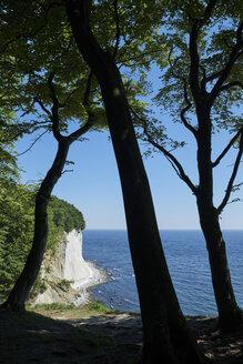 Germany, Mecklenburg-Western Pomerania, Ruegen, Sassnitz, Jasmund National Park, chalk coast - ELF01877
