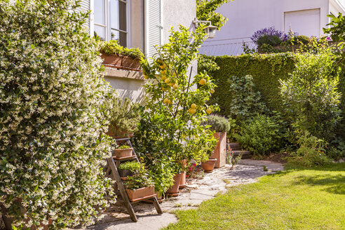 Germany, Stuttgart, potted plants in front of house - WDF04682