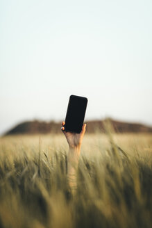 Hand reaching out from cornfield, holding smartphone - OCAF00287