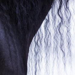 Detail of frisian horse, horse's mane - TCF05482