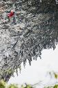 Male climber climbing on Moon Hill - a limestone cliff in Yangshuo, Guangxi Zhuang, China - CUF29956